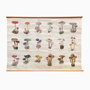 Schulkarte mit Pilzen I