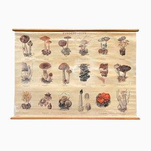 School Card with Mushrooms II