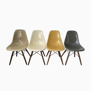 Mid-Century DSW Esszimmerstühle aus Nussholz & Elefantengrau von Charles & Ray Eames für Herman Miller, 4er Set