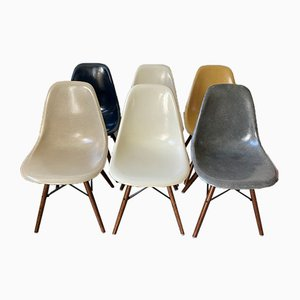 Sedie da pranzo DSW Mid-Century grigie, blu marino e in noce di Charles & Ray Eames per Herman Miller, set di 6