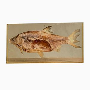French Resin Decorative Fish Display, 1970s