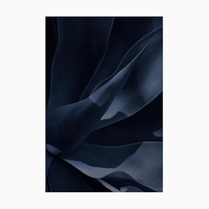 Agave II Night Garden, signierte Limited Edition, Giant Oversize Print, 2019