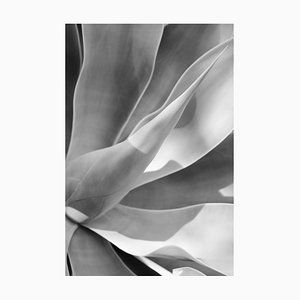 Agave II, signierte Limitierte Auflage, Oversize Druck, 2019