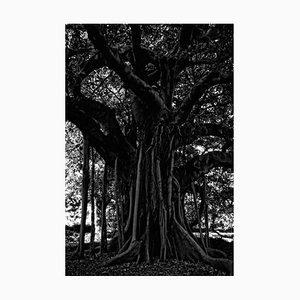 Black Tree Signed & Limited Edition, 2015