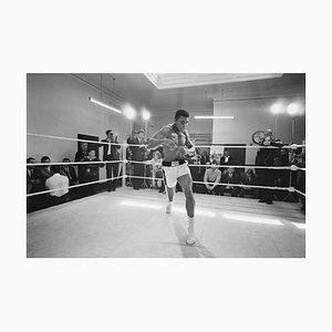 Stampa Ali In Training argentata, 1954
