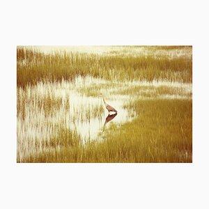 Impresión Heron Massachusetts, edición limitada, 2013