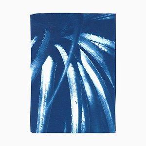 Blue Tones, Jurassic Aloe Leaves, Botanical Cyanotype on Paper, Close Up Plants, 2021