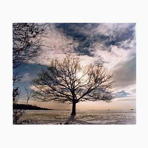 One Tree Hill, Langdon Hügellandschaftspark, 2004