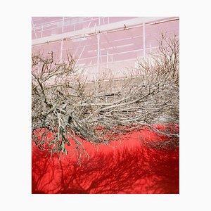 Ohne Titel, Zweige, von Silvertown von Dan Carroll, 2013-2020