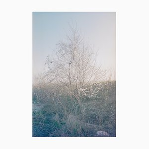 Ohne Titel Half Blossom von All Cities Are Ideas von Dan Carroll, 2014
