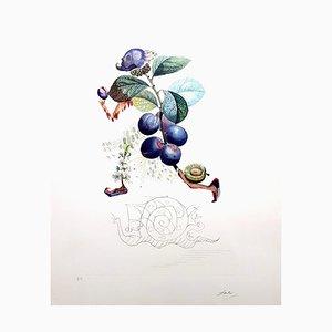 Salvador Dali, Plum, Handsignierte Lithographie, 1969