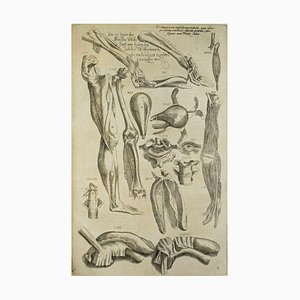 Andrea Vesalio - Anatomical Studies - De Humani Corporis Fabrica - 1642