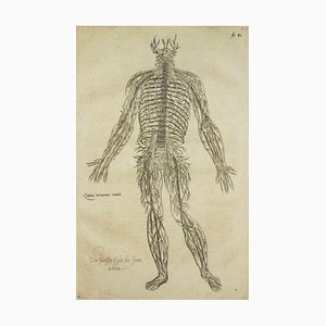Andrea Vesalio - The Circulatory System - De Humani Corporis Fabrica - 1642
