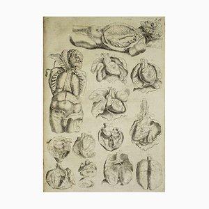Andrea Vesalio - The Organs - Original Etching -De Humani Corporis Fabrica