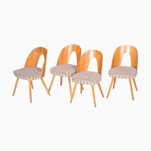 Czech Brown and Beige Ash Chairs by Antonín Šuman, 1950s, Set of 4