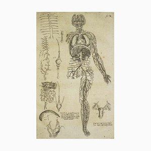 Andrea Vesalio, Das Kreislaufsystem / De Humani Corporis Fabrica, 1642