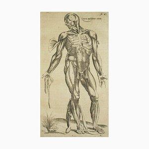 Andrea Vesalio, The Muscles / De Humani Corporis Fabrica, 1642