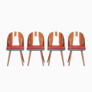 Czech Brown & Red Walnut Chairs by Architect Antonín Šuman, 1950s, Set of 4