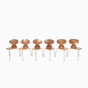 Vintage Modell 3100 Ant Chairs von Arne Jacobsen für Fritz Hansen, 6er Set