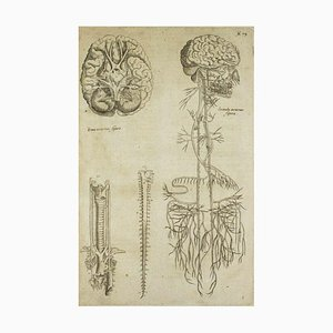 A. Vesalius, The Nervous System, The Human Body Fabric, 1642