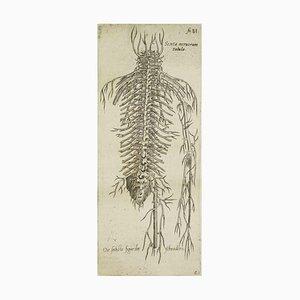 A. Vesalius, The Circulatory System, Du Dispositif de Corps Humain, 1642