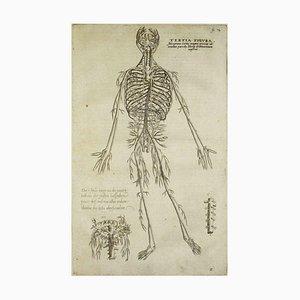 A. Vesalius, The Human Skeleton of Human Body Fabric, 1642