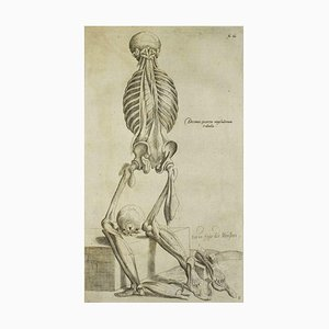Andrea Vesalio, The Human Skeleton, De Humani Corporis Fabrica, 1642