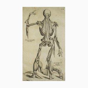 Andrea Vesalio, The Human Skeleton, Degee Corporis Fabrica, 1642