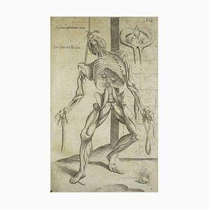 Andrea Vesalio, Human Skeleton and Muscles, De Humani Corporis Fabrica, 1642