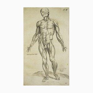 Andrea Vesalio - The Human Body - De Humani Corporis Fabrica - 1642