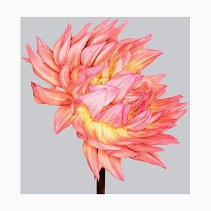 Dahlia # 4, Zeitgenössische Kunst Blumen