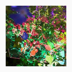 Untitled # 50, Heterotopia, Karine Laval, Contemporary, 2014