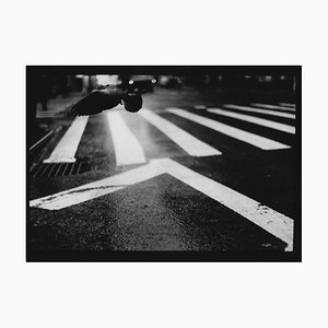 Untitled # 19, Pigeon Wall Street Aus New York, Schwarz & Weiß, 2017