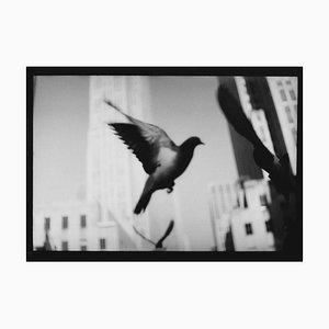 Untitled # 23, Tige Ny Landschaft von New York, Schwarz-Weiß-Fotografie, 2018