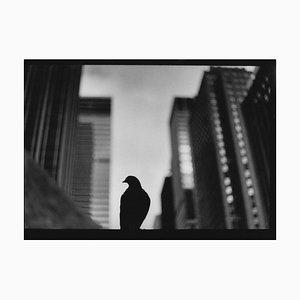 Untitled # 30, Pigeon 5th Avenue Von New York, Schwarz und Weiß, Street Photo, 2017