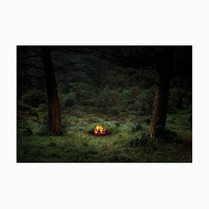 Fires 4, Ellie Davies, Contemporary Photography, Forest Imagery, 2018