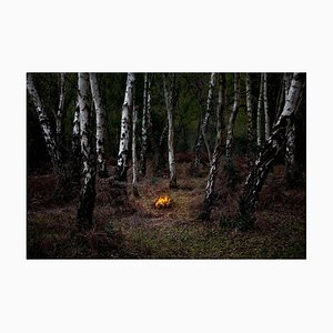 Fires 6, Ellie Davies, Conceptual Photography, Forest Imagery, 2018