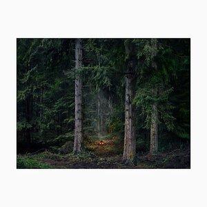 Fires 9, Ellie Davies, Photograph, 2018