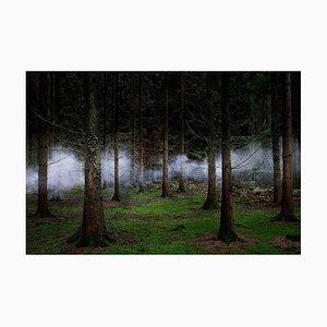 Between the Trees 2, Ellie Davies, 2014