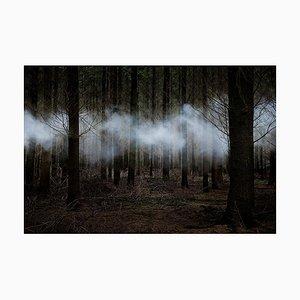 Between the Trees 6, Ellie Davies, 2014