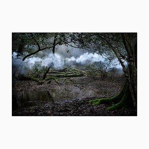 Between the Trees 9, Ellie Davies, 2014