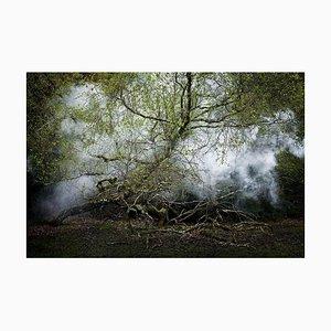 Between the Trees 13, Ellie Davies, 2014