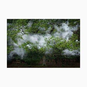 Between the Trees 12, Ellie Davies, 2014