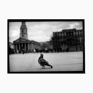 Untitled # 16, Pigeon Trafalgar Square Von Eternal London, Giacomo Brunelli 2013