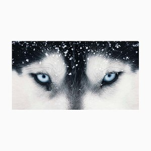 Cleopatra Augen, Hunde, Portrait