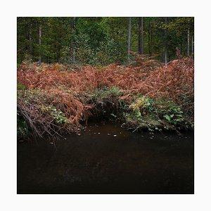 Half Light 7, Ellie Davies, Britische Landschaft, Fotografie
