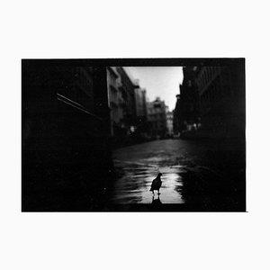 Untitled # 18, Pigeon Covent Garden Von Eternal London, Giacomo Brunelli, 2013