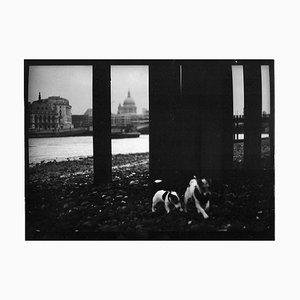 Untitled # 21, Dogs St. Pauls Von Eternal London, Giacomo Brunelli, 2013