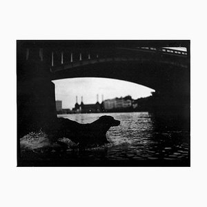Untitled # 25, Dog Battersea Bridge von Eternal London, Giacomo Brunelli, 2012