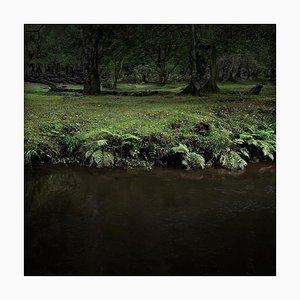 Half Light 9, Ellie Davies, Fotografie